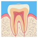 健康な歯の状態